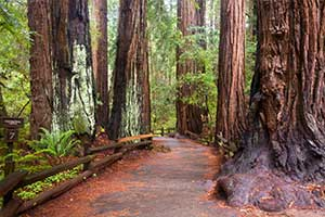 Cathedral Grove Tours at Miracle Mile Limousine Service and Sight-Seeing Tours of Nanaimo, BC